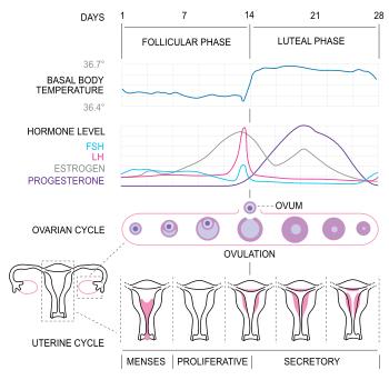 external image menstrualchartpic.png